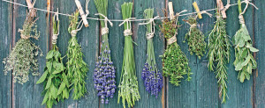 fines herbes - cuisine - basilic - thym - romarin - étudiant - appartement - kangalou